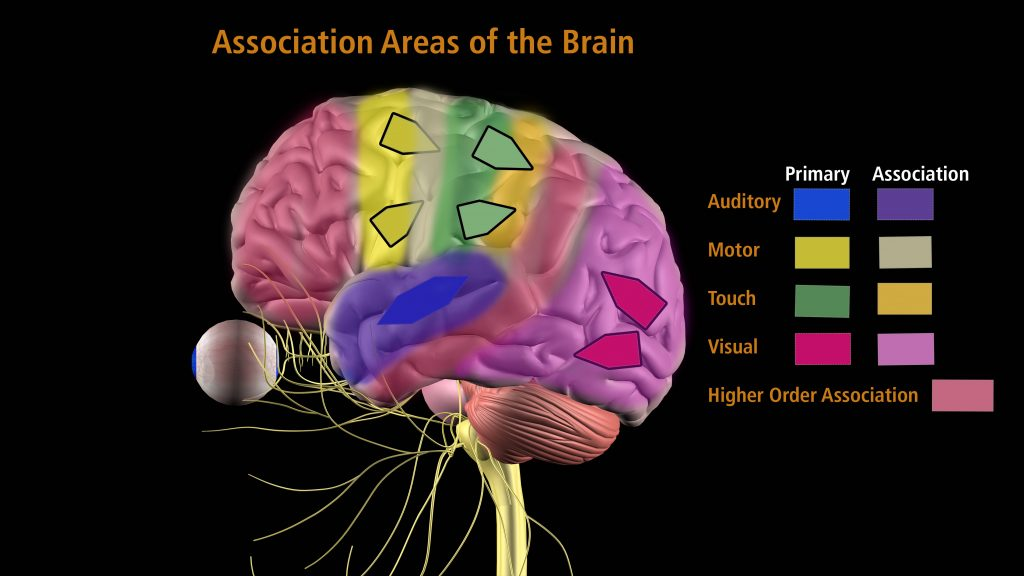 Concussion are complex injury that affect areas of the brain.