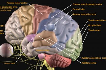 stroke rehab continuing education