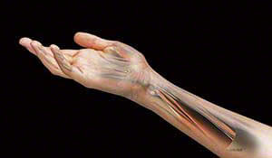 Comprehensive Management of Elbow, Wrist and Hand- Physical therapy continuing education course
